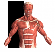 Visual Anatomy 2 gratuit sur Android
