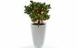 Pot de fleur intelligent Parrot Pot à 79€ au lieu de 99€ @ Parrot / Priceminister